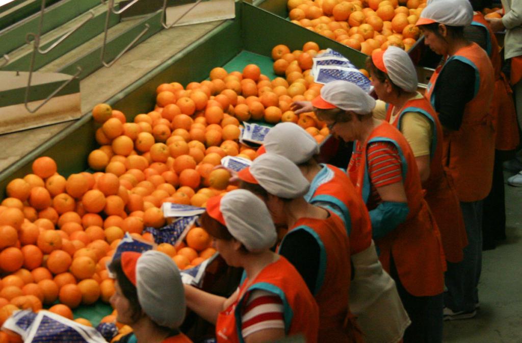 frutas carrusel